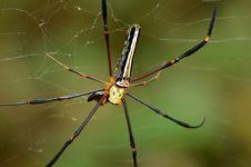 Black Spider. Royalty Free Stock Photos