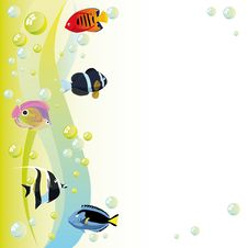 Free Fishes Royalty Free Stock Photography - 26579407
