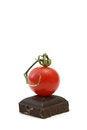 Free Fresh Tomatoes ,cherry Stock Image - 26586331