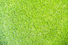 Free Green Duckweed On Water Royalty Free Stock Images - 26583099