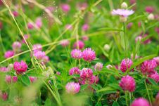 Free Clover Stock Images - 26585944