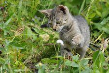 Free Striped Kitten Stock Photo - 26596980