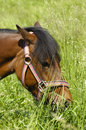 Free Pony And Green Grass Stock Photography - 2669872