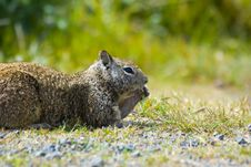 Free Ground Squirrel Stock Image - 2660351