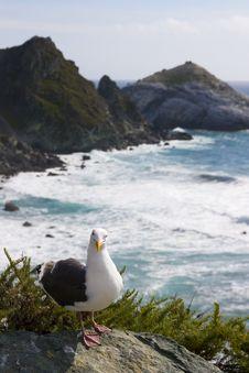 Free Seagull On The Beach Royalty Free Stock Photos - 2660418
