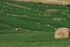 Free Landscape Hay Balls 5 Stock Image - 2660811