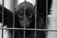 Free Sad Monkey Stock Photography - 2662772