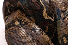 Free Snake Stock Image - 2662851