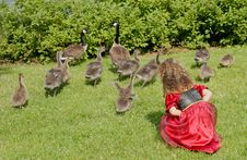 Free Geese And Child Stock Photography - 2663202