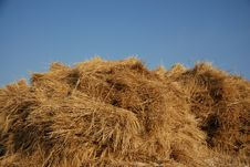 Free Wheat Stock Images - 2663714