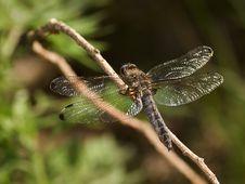 Free Dragonfly Stock Photo - 2664720