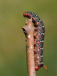 Free Caterpillar Stock Image - 2664741