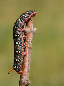 Free Caterpillar Royalty Free Stock Image - 2664746