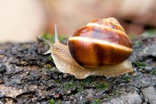 Free Snail In A Summer Garden 1 Stock Photo - 2666430