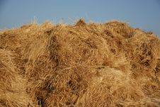 Free Wheat Stock Photography - 2666942