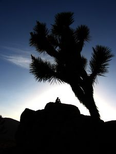 Free Joshua Tree Royalty Free Stock Images - 2669509