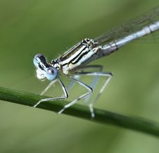 Free Dragon-fly Stock Images - 2669934