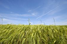 Free Corn Stock Image - 2669941