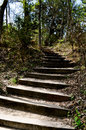 Free Steps Into The Woods Stock Photography - 26602982