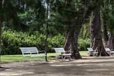 Free White Chairs Beside Big Trees. Royalty Free Stock Photo - 26600075