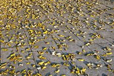 Free Yellow Autumn Leaves On The Pavement Stock Photography - 26603902