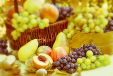 Free Autumn Fruits - Organic Fruits Royalty Free Stock Photography - 26609707