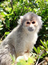 Free Squirrel Monkey Sitting On Tree Branch Stock Images - 26615914