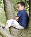Free Child On Tree Royalty Free Stock Photography - 26617977