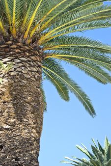 Free Palm Tree Stock Photography - 26610152