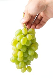Bunch Of Ripe Grapes In Woman S Hand Royalty Free Stock Photo