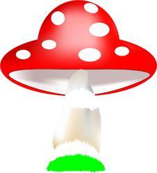 Free Mushroom Stock Photo - 26613130