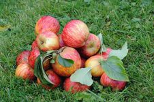 Free Apples On The Grass Royalty Free Stock Photos - 26614198