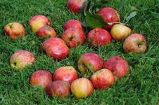 Free Apples On The Grass Stock Photography - 26614342
