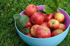 Free Apples In A Bowl Stock Photo - 26614360