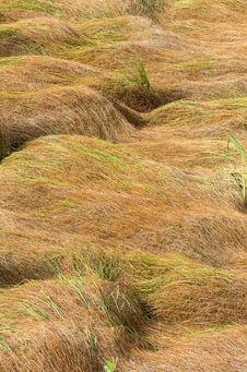 Free Dry Grass Stock Image - 26616871