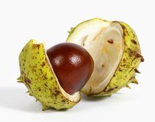 Free Chestnut Stock Image - 26618381