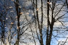 Free Reflection Of Autumn Royalty Free Stock Photography - 26622027