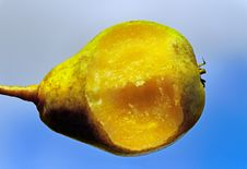 Free Bit Pear. Stock Image - 26624371