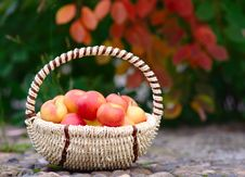 Free Apples In The Basket Royalty Free Stock Images - 26625709