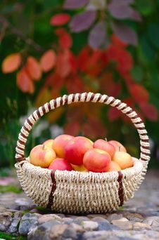 Free Apples In The Basket Stock Photo - 26625720