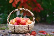 Free Apples In The Basket Stock Photos - 26625723