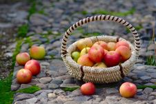 Free Apples In The Basket Stock Image - 26625731
