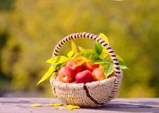 Free Apples In The Basket Royalty Free Stock Images - 26625739