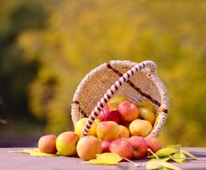 Free Apples In The Basket Stock Photography - 26625742