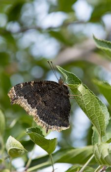 Free Butterfly Royalty Free Stock Images - 26627669