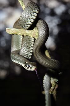 Free Snake Stock Photos - 26628153