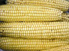 Maize Corncobs