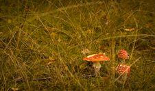 Free Mushroom Stock Photos - 26630343