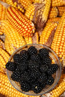 Free Blackberries And Maize Royalty Free Stock Photos - 26631858