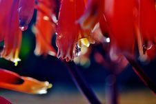 Free Rain Drop Royalty Free Stock Photography - 26634157